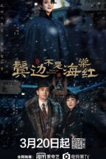 Nonton Streaming Download Drama Winter Begonia (2020) Subtitle Indonesia